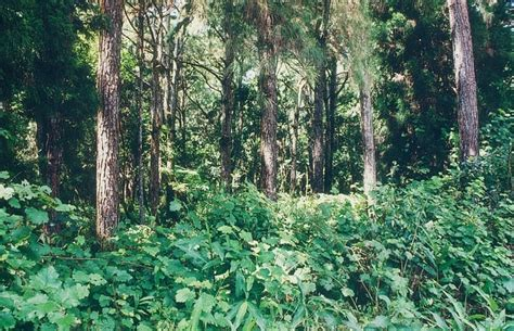 types of plants in a tropical rainforest types of plants in the tropical rainforest pictures to pin