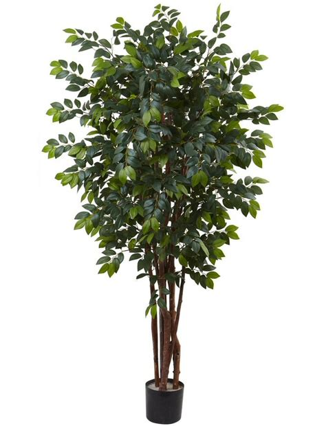 nearly 3 ft ficus silk tree 5298 the silk trees 28 images 3 foot ficus tree potted 5298