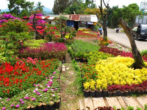 Bibit Bunga Di Indonesia tanaman hias villa miranti kota bunga