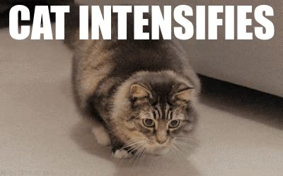 Meme Gifs - intense cat gif find share on giphy