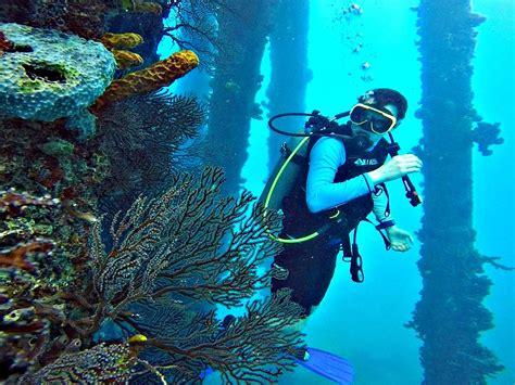 dive barbados top dive in barbados according to a padi pro
