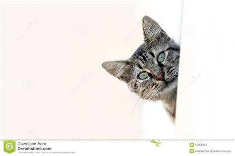 d un coup synonyme jeter un coup d oeil de chat photo stock image du regard