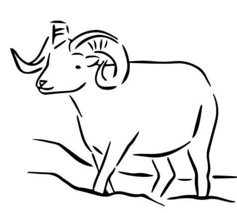 coloring pages alaska animals desenho de carneiro de dall do alaska para colorir
