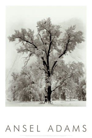 Wall Decor Printed Poster Poster Kayu Oak Tree oak tree snowstorm yosemite national park 1948 poster print by ansel 24x36