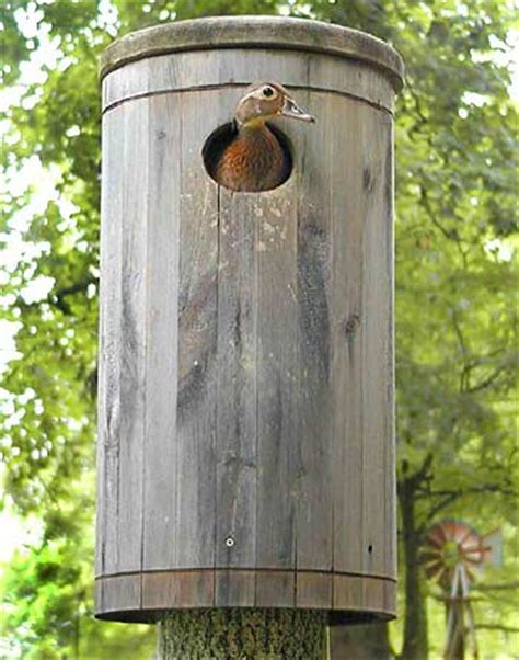pattern for wood duck box bird houses and wildlife nesting boxes and mounts by