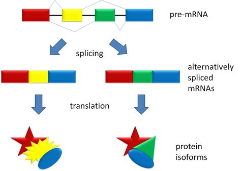 pre meaning alternative splicing simple the free