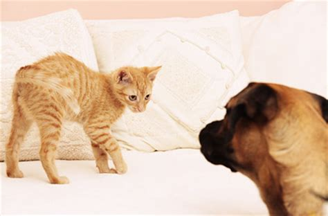 how to introduce dogs and cats in the same house introducing a dog to a cat how to do this the right way
