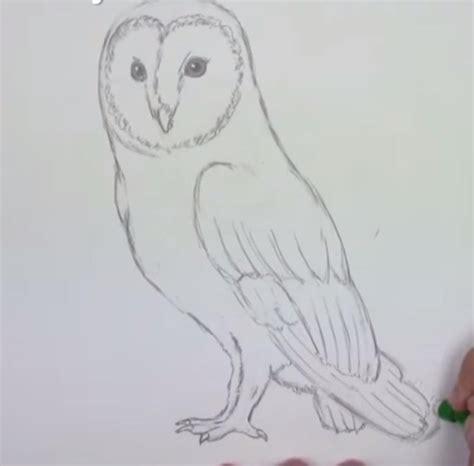 einfache le eule einfach zeichnen dekoking