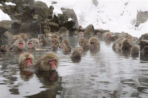 Baby Born Shower Bath jigokudani hot spring in nagano monkeys also enjoy it