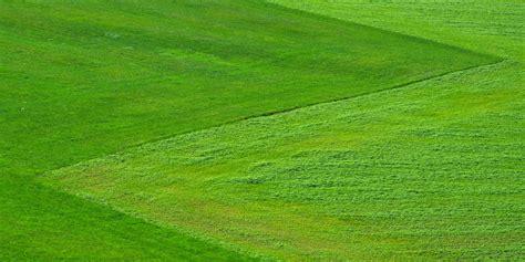 semina erba giardino quando seminare l erba in giardino qualche consiglio