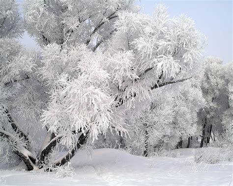 блогът на ати малка снежинка на миглите ми кацна