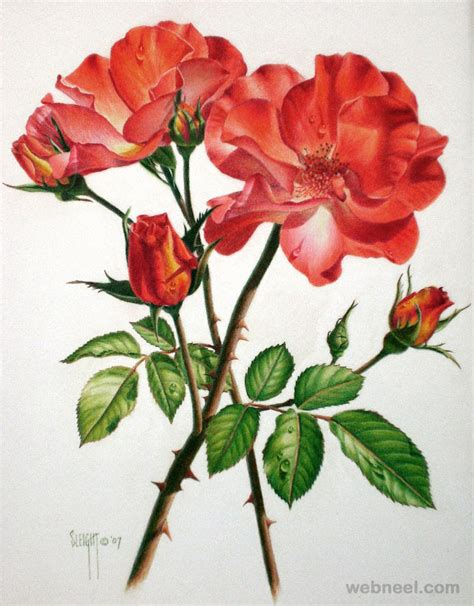 Drawing Of Flowers by 25 Beautiful Drawings And Paintings For Your Inspiration
