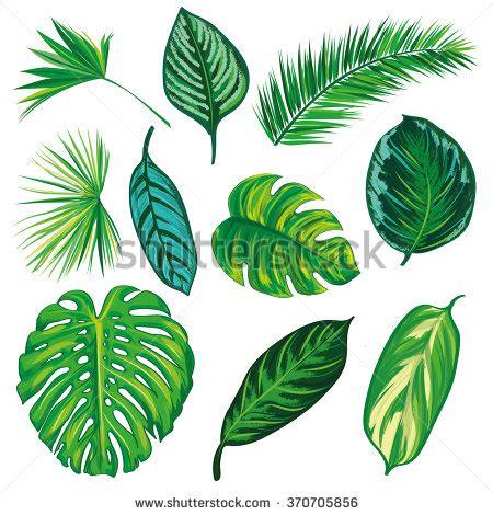 Daun Paya Black 1 royalty free tropical leaves silhouette fa e 453237100