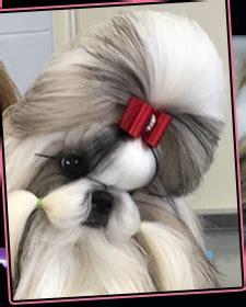 shih tzu dog food florida shih tzu puppies dog food
