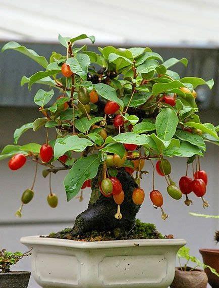 studio floral dora santoro bonsai de frutas