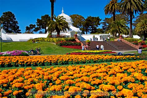 Golden Gate Park Flower Garden Flower Beds And Palm Trees At Conservatory Of Flowers In Golden