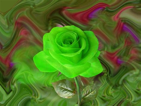 wallpaper of green rose green rose bud with beautiful leaves artline feel the