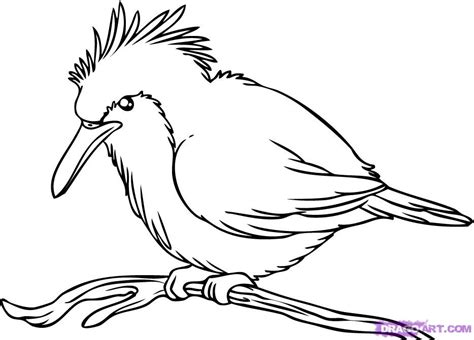 how to your bird how to draw a kingfisher bird step by step birds animals free drawing
