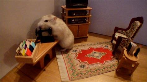 hamster doll house hamster wakes up in a dollhouse and spends his day looking for love