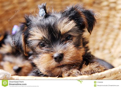 puppy at home royalty free stock photos
