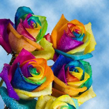 rainbow colored roses rainbow roses free delivery rainbow colored roses globalrose
