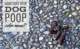 hyperkeratosis in dogs does your