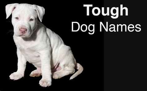 tough names names great ideas for naming your puppy the happy puppy site