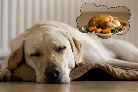 food for dogs dogs human food breeds picture