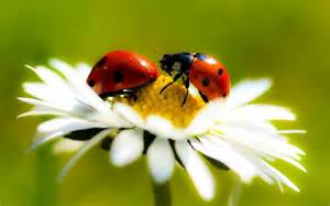 what color are ladybugs ladybugs colors of flight