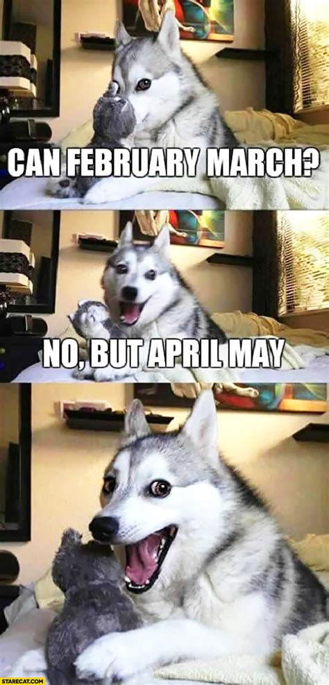 february march   april  funny happy dog meme