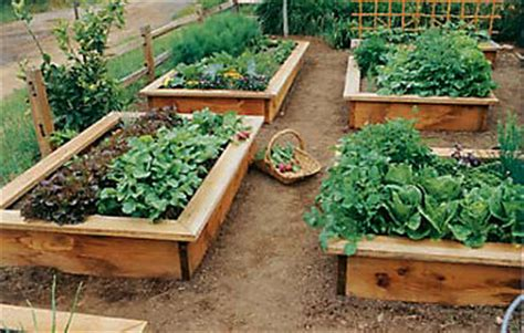 raised bed gardening learn how to build a raised garden bed gardening