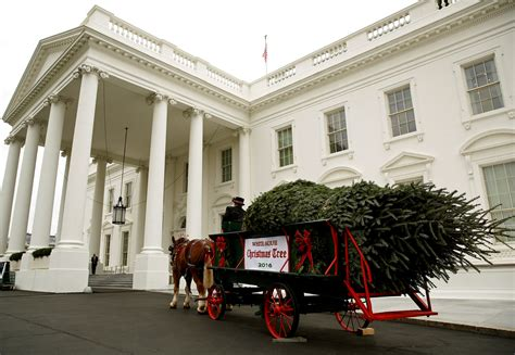 white house holiday tree white house christmas tree lighting live stream 2016 watch obama s final national
