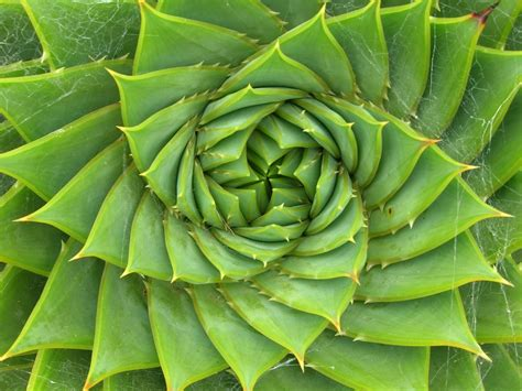 spiral pattern nature mandala madness natural spirals