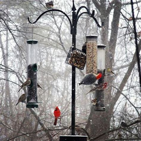 wintertime birding and project feederwatch wvxu