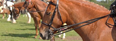 how to rehome a how to rehome a or pony from us rspca