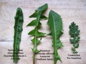 Kitchen Garden: Herbs Archives