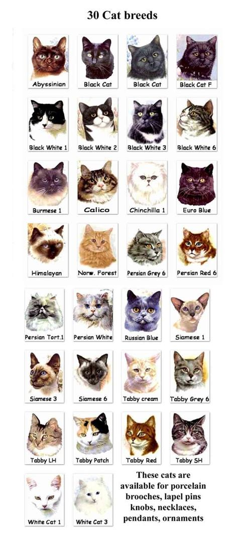 types of cats top unusual cat breeds on earth persian cat breeds and
