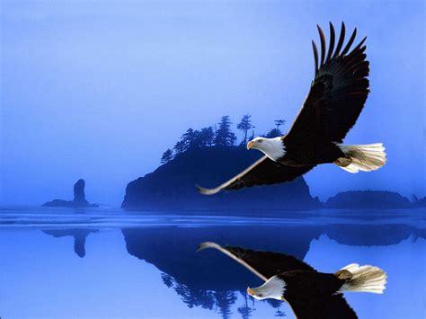 eagle birds wallpapers entertainment