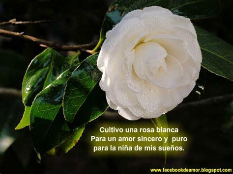 imagenes rosas blancas de luto im 225 genes de luto con rosas blancas imagenes de luto