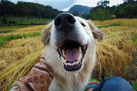 black gums in dogs why do dogs black gums pet care facts