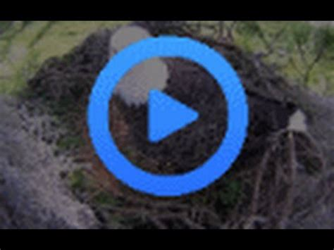 southwest florida eagle cam southwest florida eagle cam youtube