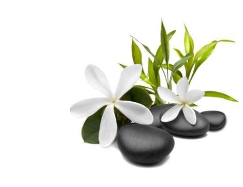 imagenes de flores zen foto mural flores blancas piedras negras zen