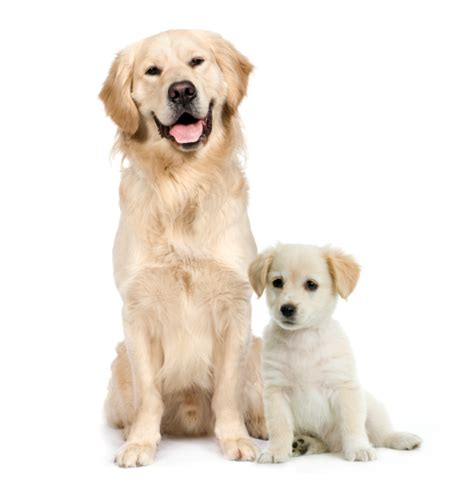 good house dogs medium size medium sized dog breeds good with kids dog pet photos gallery ga639aa3wl