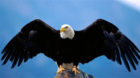 imagenes animales que vuelan 191 por qu 233 vuelan las aves