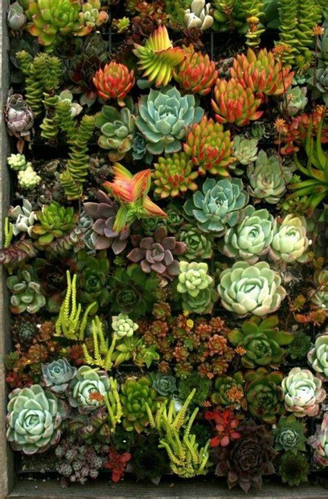 Succulent Wall Plants Pinterest Wall Succulent Garden