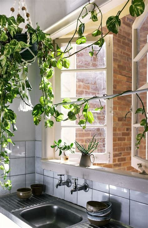 plants in the kitchen 12197 best images about urban jungle bloggers on pinterest