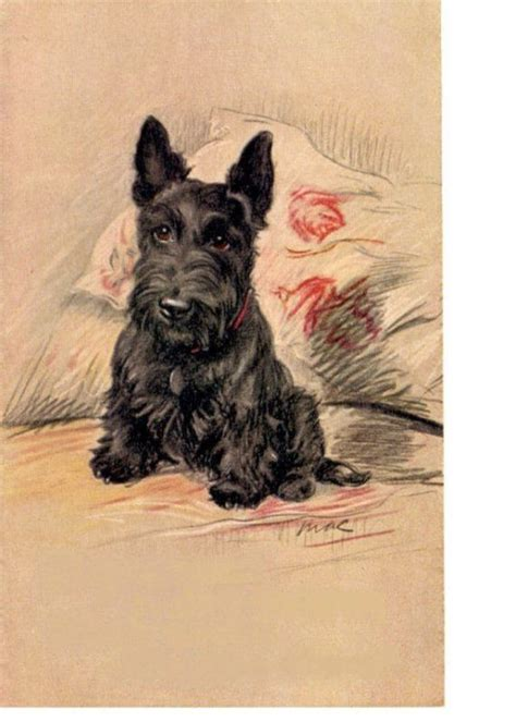 scottish terrier tattoo design 124 best ideas about vintage prints on scottie