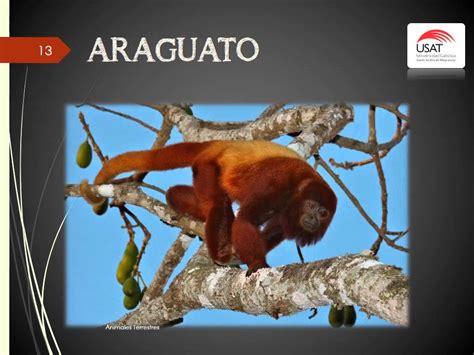 imagenes de animales que empiecen con la letra d animales terrestres que empiezan con la letra a youtube