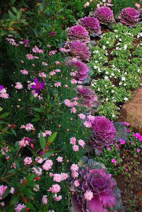 ornamental cabbage annual or perennial 162 best images about old fashioned garden on pinterest