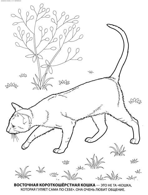 depression cats a coloring book by cat chion books раскраска восточная короткошерстная раскраски кошек